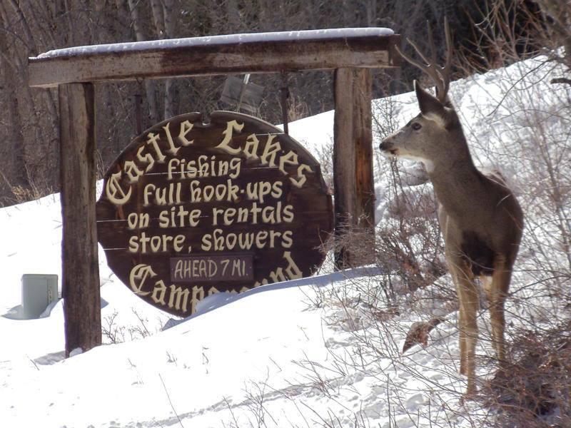 sign deer